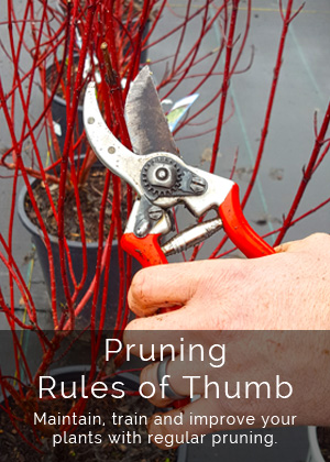 Pruning Rules of Thumb
