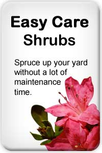 Spruce up your yard without a lot of maintenance time