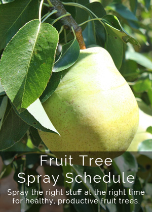 Fruit Tree Spray Schedule
