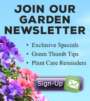 Youngs Garden Newsletter