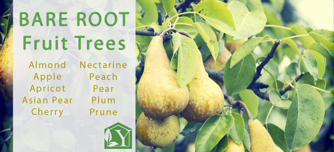 Bare Root Fruit Trees Now Available