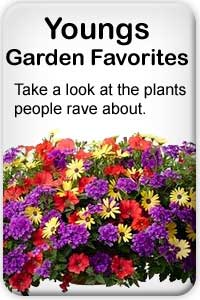 Take a look at the plants people in Roseburg rave about
