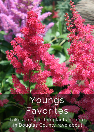 Youngs Plants - Favorites