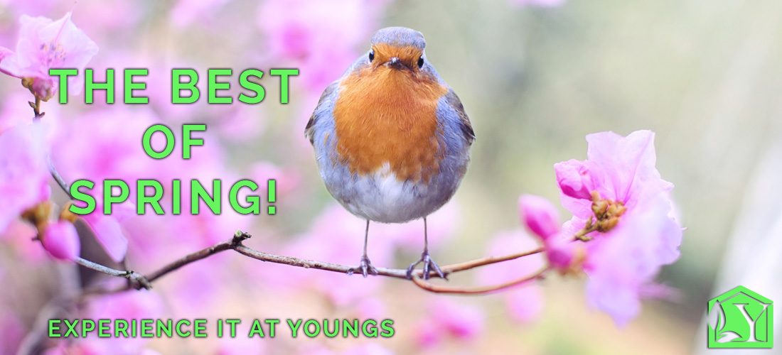 Best of Spring at Youngs