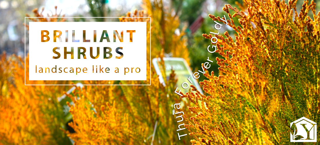 Brilliant Landscape Plants - Trees and Shrubs at Youngs Garden