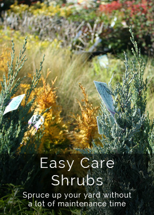 Youngs Plants - Easy Care