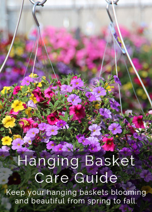 Hanging Basket Care Guide